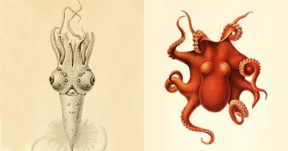 Cephalopod Atlas: Stunning, Sensual Illustrations from the World's First Encyclopedia of Octopus and Squid Wonders from the Ocean Depths