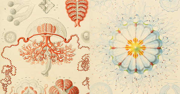 Terror, Tenderness, and the Art of Buoyancy in Despair: How Ernst Haeckel's Personal Tragedy Begot His Stunning 19th-Century Drawings of Jellyfish