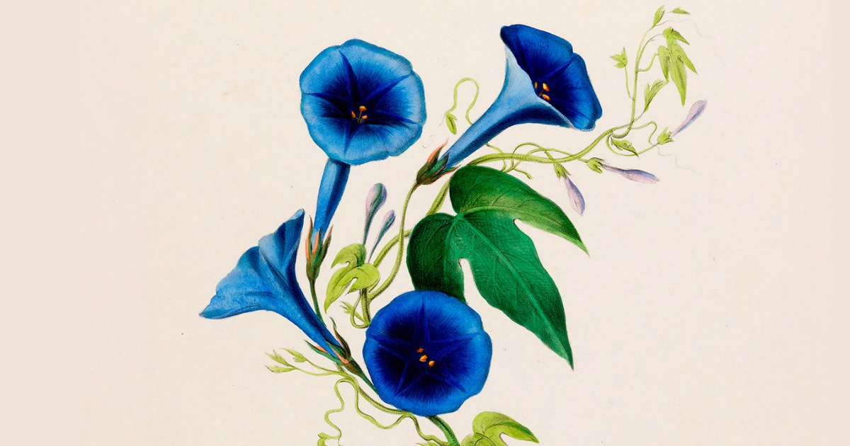 Art and Aliveness: Willa Cather on Attention and the Life of the Senses as the Key to Creativity