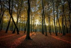 1024px-hopwas_woods_sun