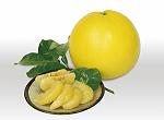 八代特産晩白柚の写真