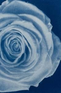 cianotipia---Branco-Ottico07
