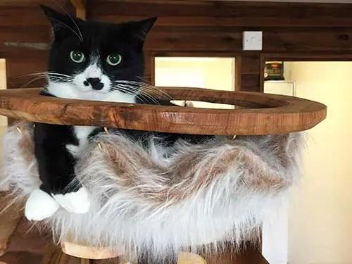 bespoke-cat-tree-hammock-3