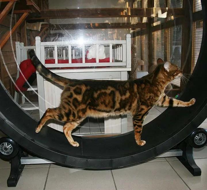 cat-exercise-wheel-brankley-cattery-1