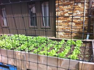 Our Garden - Branson-Hollister Senior Center