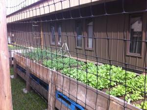 Our Garden - Branson-Hollister Senior Center
