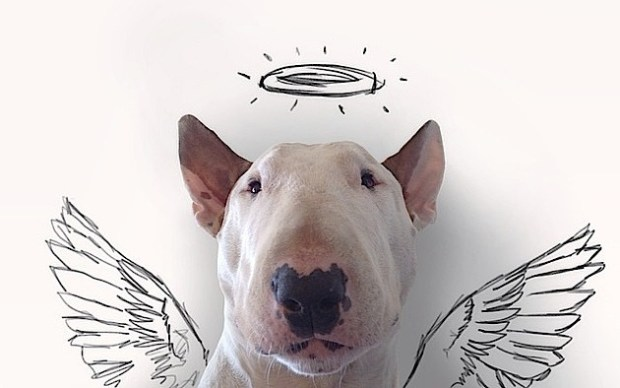 snygo_files004-rafael-mantessos-hilarious-sketches-of-bull-terrier