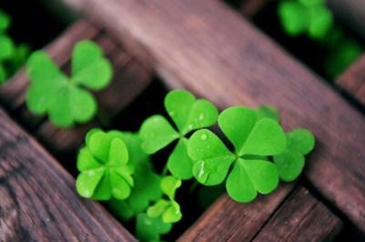 Plantas-que-atraem-sorte