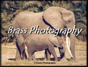 Brass Photography