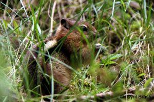 Chipmunk-in-Grass-021.jpg