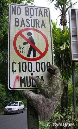 Sloth-on-Traffic-Sign-002.jpg
