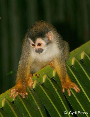 Squirrel-Monkey-203.jpg