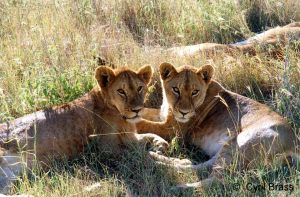 Two-Lions.jpg
