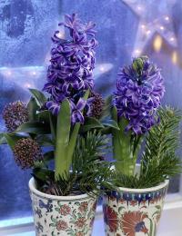 Blumenfreude05
