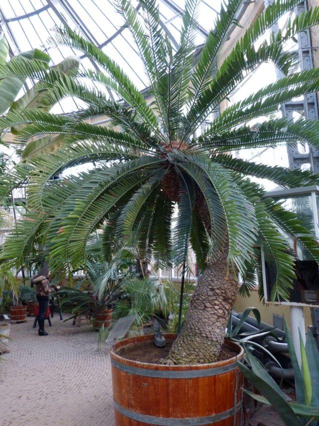 300 y-o plant