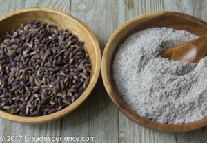Purple Barley Grains milled into flour
