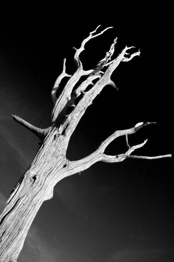 Dead tree, Bucksaw, Harry S Truman Lake, Missouri. Copyright © 2011 Gary Allman, all rights reserved.
