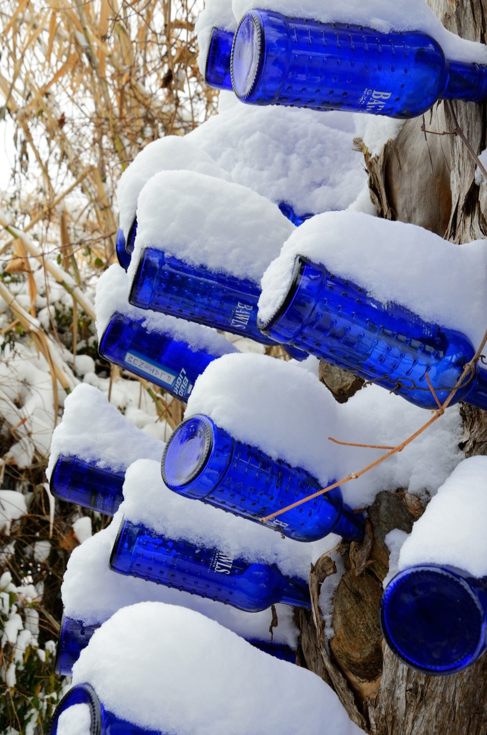 More snow on blue bottles. Copyright © 2013 Gary Allman, all rights reserved.