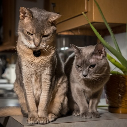 Getzger and Tubby watch us eat dinner. Copyright © 2016 Gary Allman, all rights reserved.