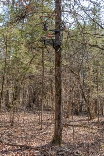 Tree Stand at Busiek State Forest and Wildlife Area
