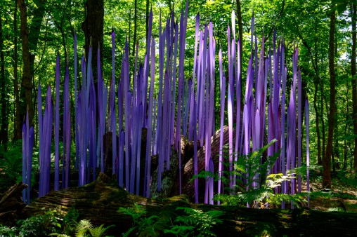 Photograph of Neodymium Reeds. Artist: Dale Chihuly. Chihuly in the Forest. Crystal Bridges Museum of American Art.
