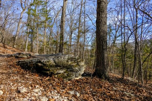 Trail-side rock