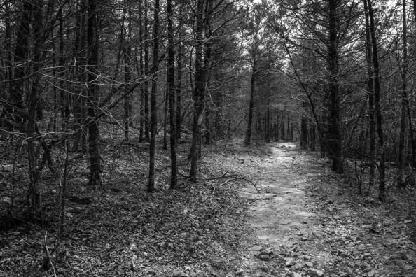 Busiek Yellow Trail