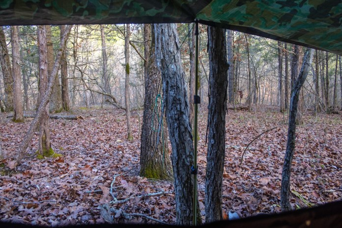 Morning view from my hammock.