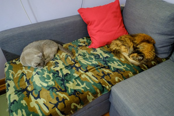 Sprinky and Tubby enjoying the new office couch