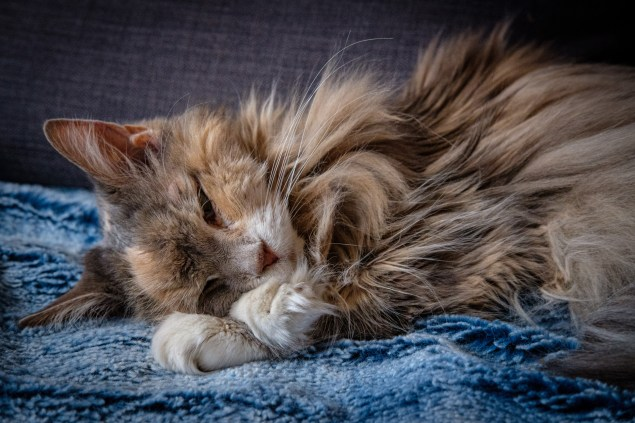 Sleepy Mao - she's having trouble closing her eyes. Copyright © 2019 Gary Allman, all rights reserved.