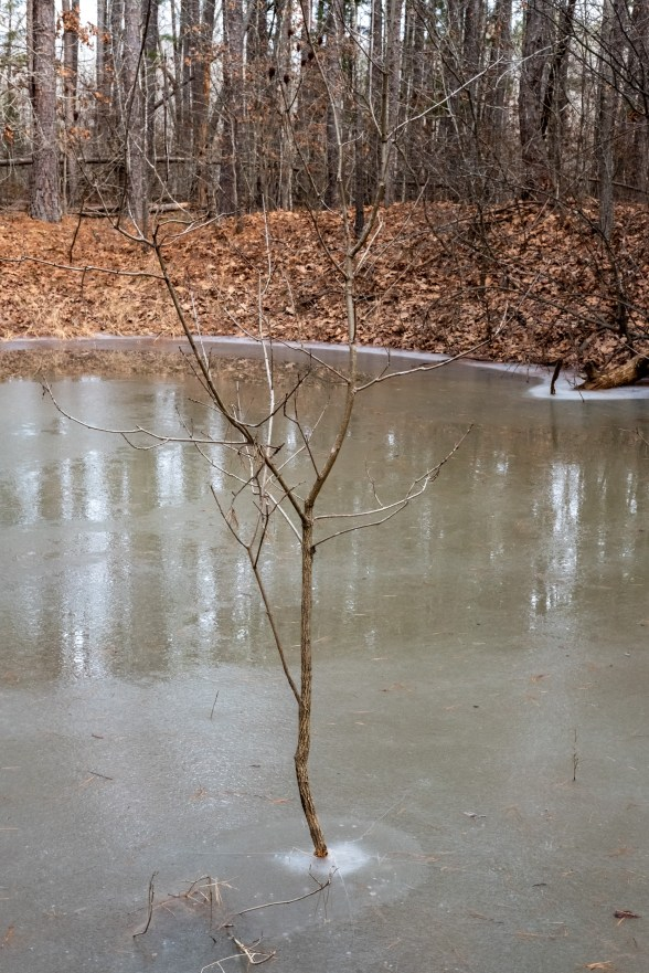Frozen Stock Pond. Copyright © 2020 Gary Allman, all rights reserved.