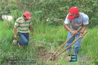 Planting coconut trees