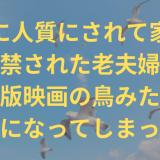 seagull-title