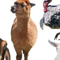A picture of a menagerie of animals