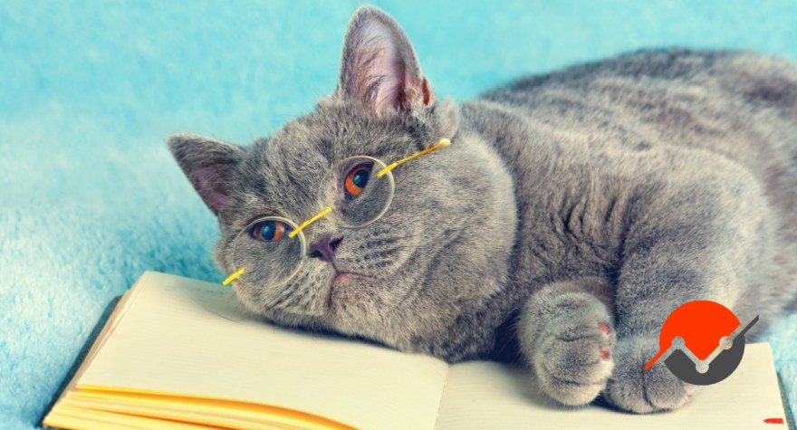 A picture of a kitty on a book