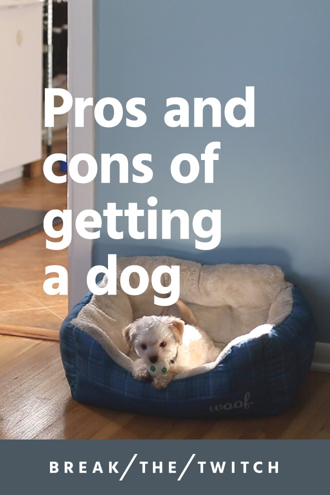 A Minimalist's Perspective On Getting A Dog // Getting a dog changed our lives. We share the pros and cons of getting a dog in this post and video. // www.breakthetwitch.com