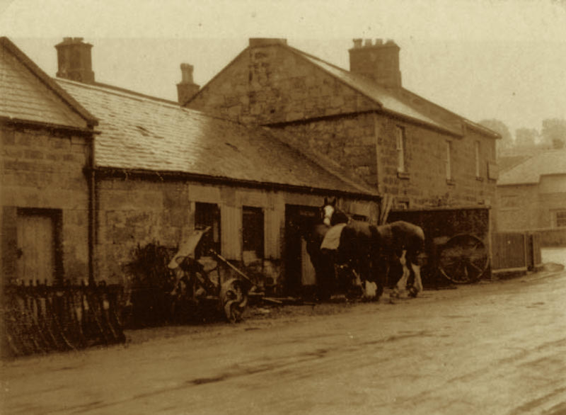 Horses at the old forge Powburn, Northumberland