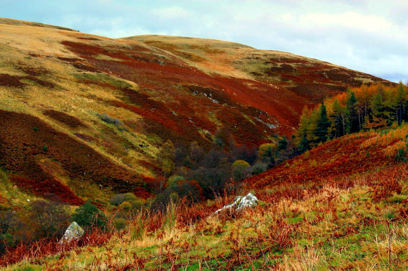 Linhope upland heath in October