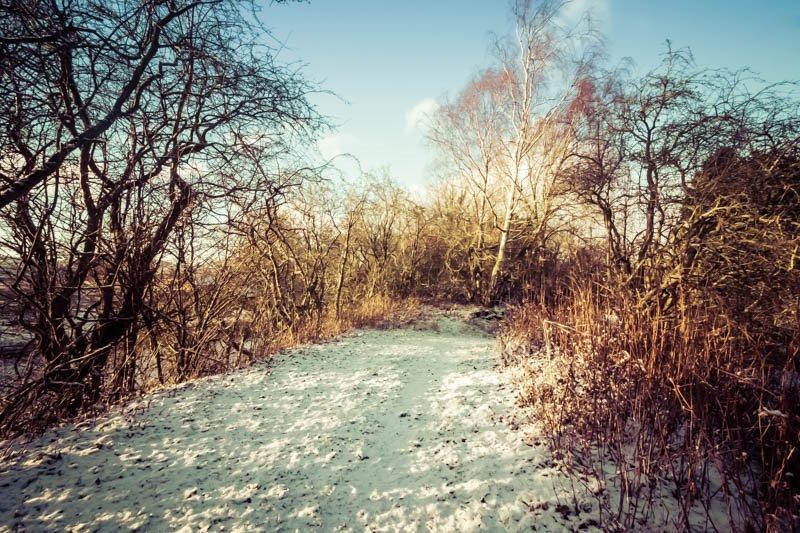 Crawley Dene snow (3P8A2526)