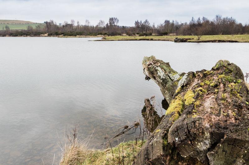 Branton Lakes grey day walk west lake