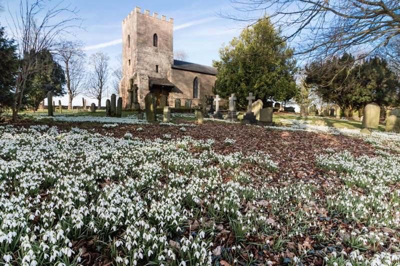 Ilderton church snowdrops