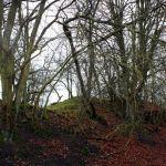 Crawley Dene bare trees