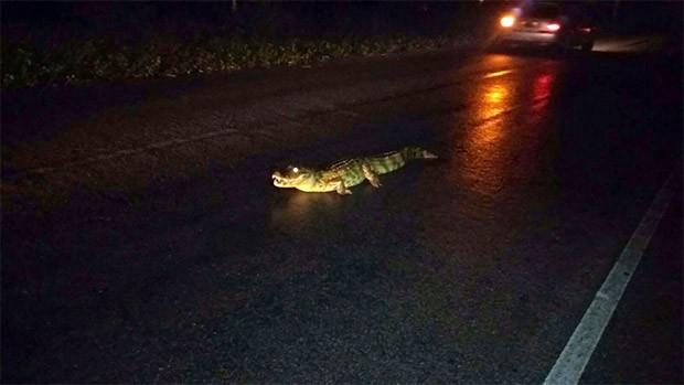 Animal foi atropelado na estrada que liga Macaíba (Foto: PRF)