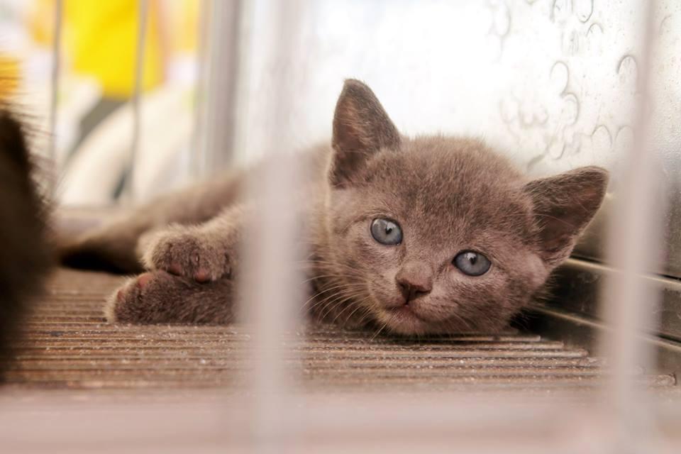 Muitos gatos estão abandonados nas ruas da cidade