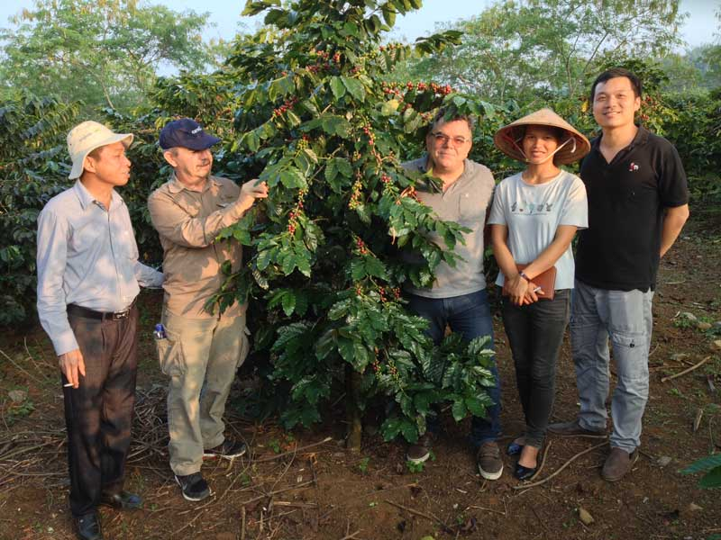 The-Catimor-Coffee-tree---a-local-species---has-been-chosen-to-collect-control-samples- Breedacfs-eu-funded-project