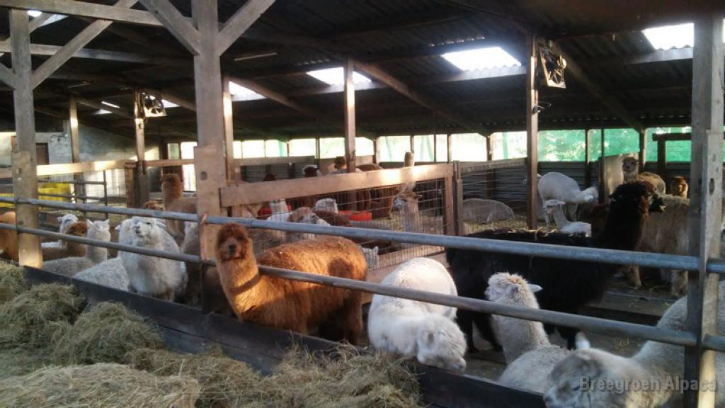 Een gewone dag in de stal
