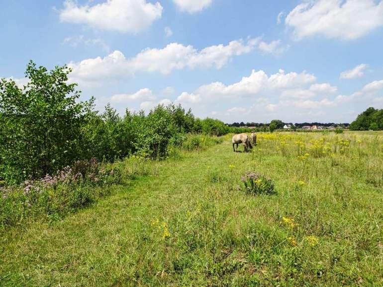 Rivierpark Maasvallei wilde paarden bregblogt.nl