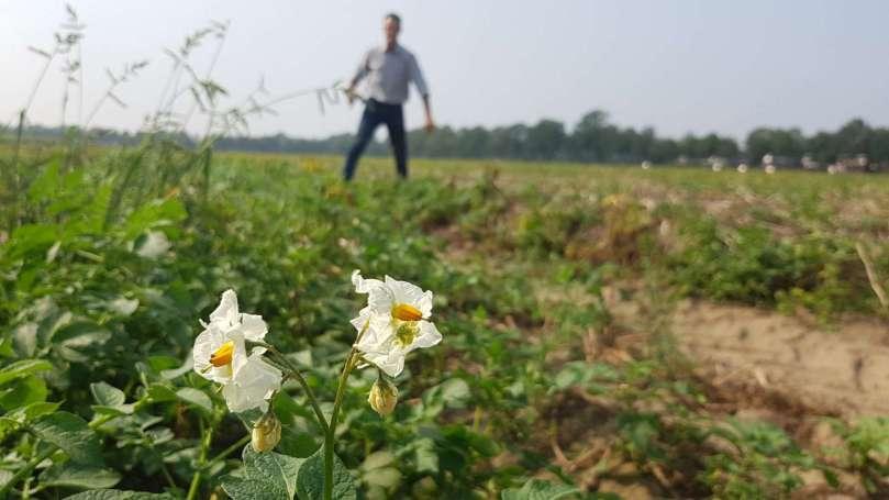 Aardappelen even celavita bregblogt.nl