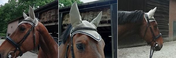 Oornetje paard