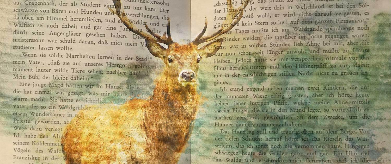 Hirschaquarell auf Text © Christa Breineder